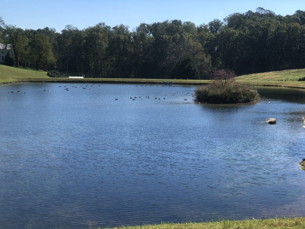 Nature Pond 2 - Pine Valley Farms