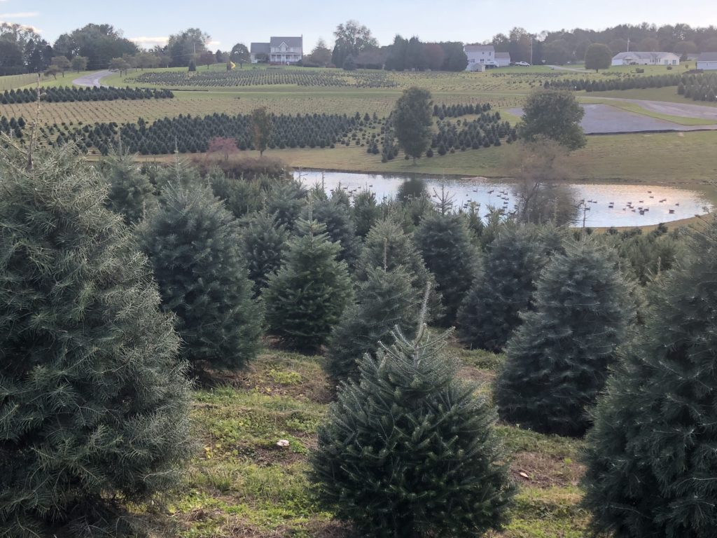 Pine Valley Farms - Gallery